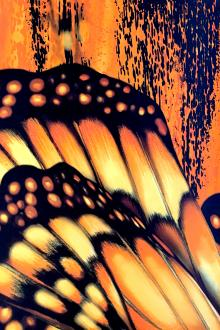 Printed Silk Twill Panel with Large Monarch Butterfly Wings0