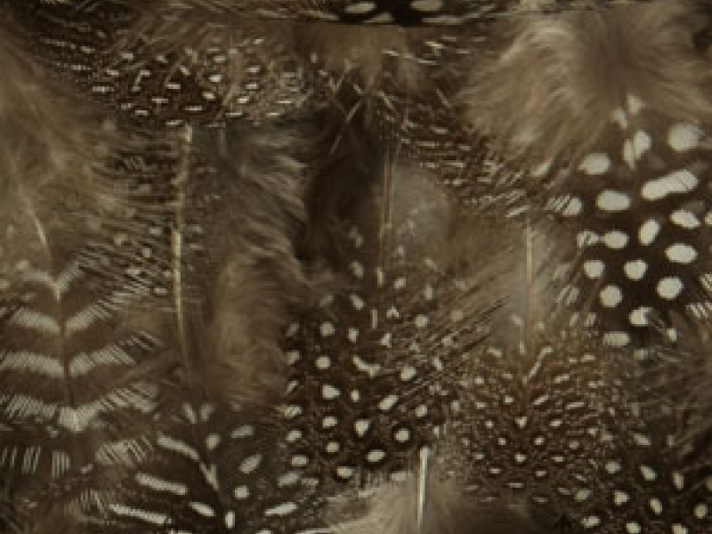 Feathers on Chiffon1